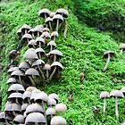 Mushroom on Moss Muir Woods 2007 by Alan LeClair