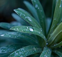 Water Drops by Mark O'Hare
