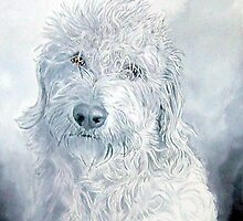 Labradoodle Ginger by Yvonne Carter