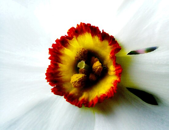 Heart of a Daffodil by James Stevens