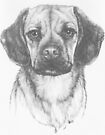 Mr. Puggle by BarbBarcikKeith