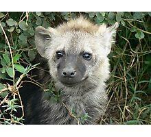 baby hyena Photographic Print