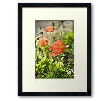 Poppie Drifts © Framed Print