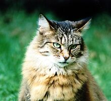 Cat sitting on grass by ljm000