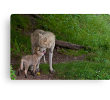 Arctic Wolf And Pup Canvas Print