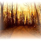 Deep into the Woods by Judi Taylor