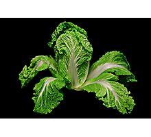 Cabbage Photographic Print