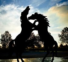 Stallions Rampant at Rymill Coonawarra Winery by Steve Chapple