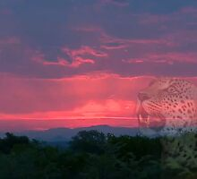 Leopards & Other African Wildlife by Bulalio