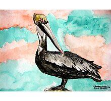 pelican bird 3 Photographic Print