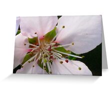 Peach Blossom Macro Greeting Card