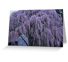 Magnificent Weeping Cherry  Greeting Card