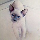My Precious Cat. by Siamesecat