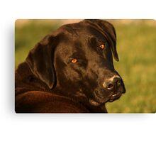 Black Lab - Labrador Retriever - Dog Photograph Canvas Print