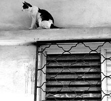 climbing cat by aska2