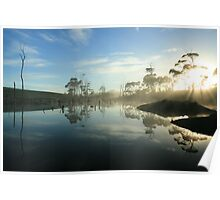 Forest morning in far nor west Tasmania , Australia Poster