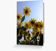 Pushing up Daisies Greeting Card
