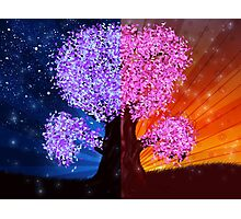 Fantasy tree at night and day time Photographic Print