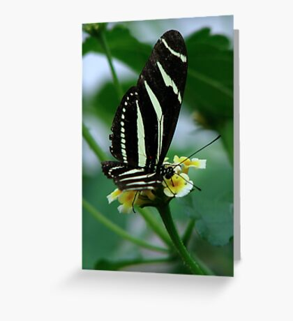 The Zebra Longwing Greeting Card