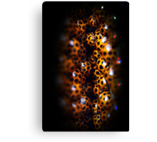 Ladybird Cavern Canvas Print