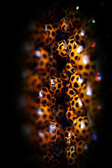 Ladybird Cavern by Steve Chapple
