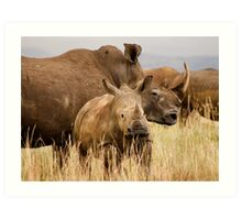 White rhino mother and calf Art Print