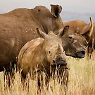 White rhino mother and calf by Sharon Bishop