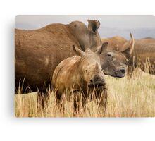 White rhino mother and calf Metal Print