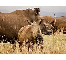 White rhino mother and calf Photographic Print