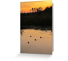 Coots on Econfina Greeting Card
