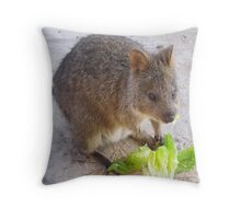 Breakfast time!   Rottnest Island 6 Throw Pillow