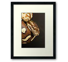 Bredl's Python Framed Print