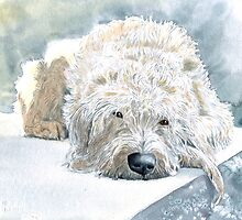 Labradoodle Naptime by Yvonne Carter