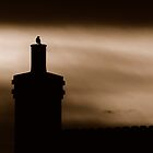 Sunrise bird on english chimney by wentbackward