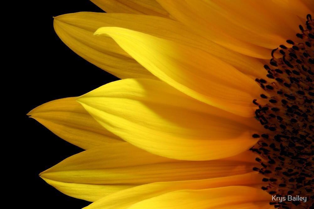 Simply Sunflower by Krys Bailey