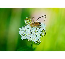 Insect on a white flower macro Photographic Print