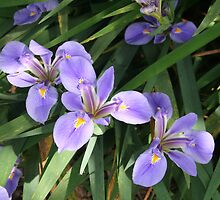 Purple Flowers by debduhon