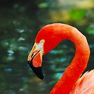A Flamingo on Fire by Franklin Lindsey