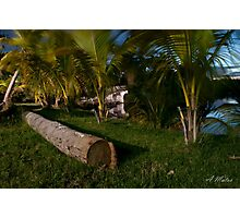 Tropical night Photographic Print