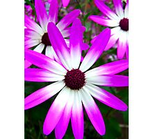 Colourful spring Photographic Print