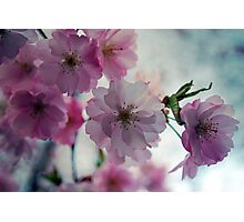 This is why I love spring Photographic Print