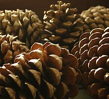 Cones by Tony Hadfield