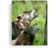 The Howling Metal Print
