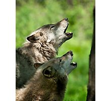 The Howling Photographic Print
