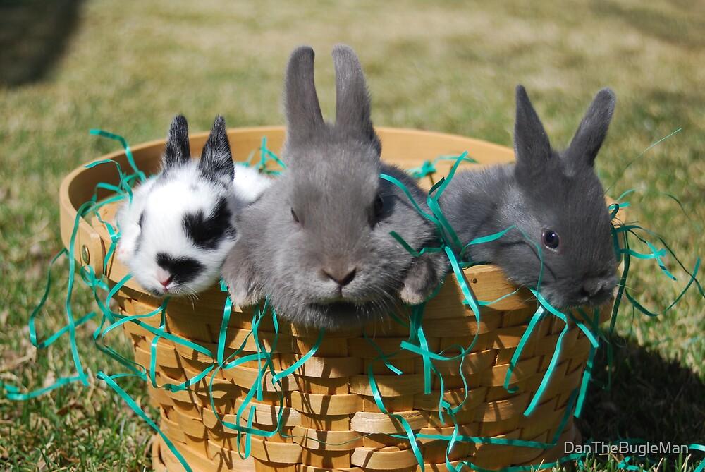 Easter bunnies002 by DanTheBugleMan