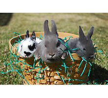 Easter bunnies002 Photographic Print