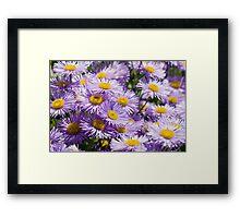 Purple Daisies Framed Print