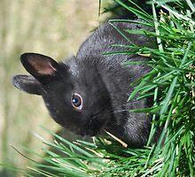 Easter bunny003 by DanTheBugleMan