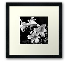Droplets On The Lillies Framed Print