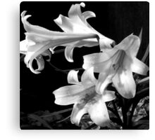 Droplets On The Lillies Canvas Print